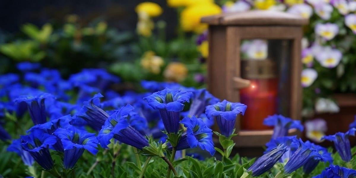 Kwiaty Na Cmentarz Co Posadzic Na Cmentarzu Luxstone Granity